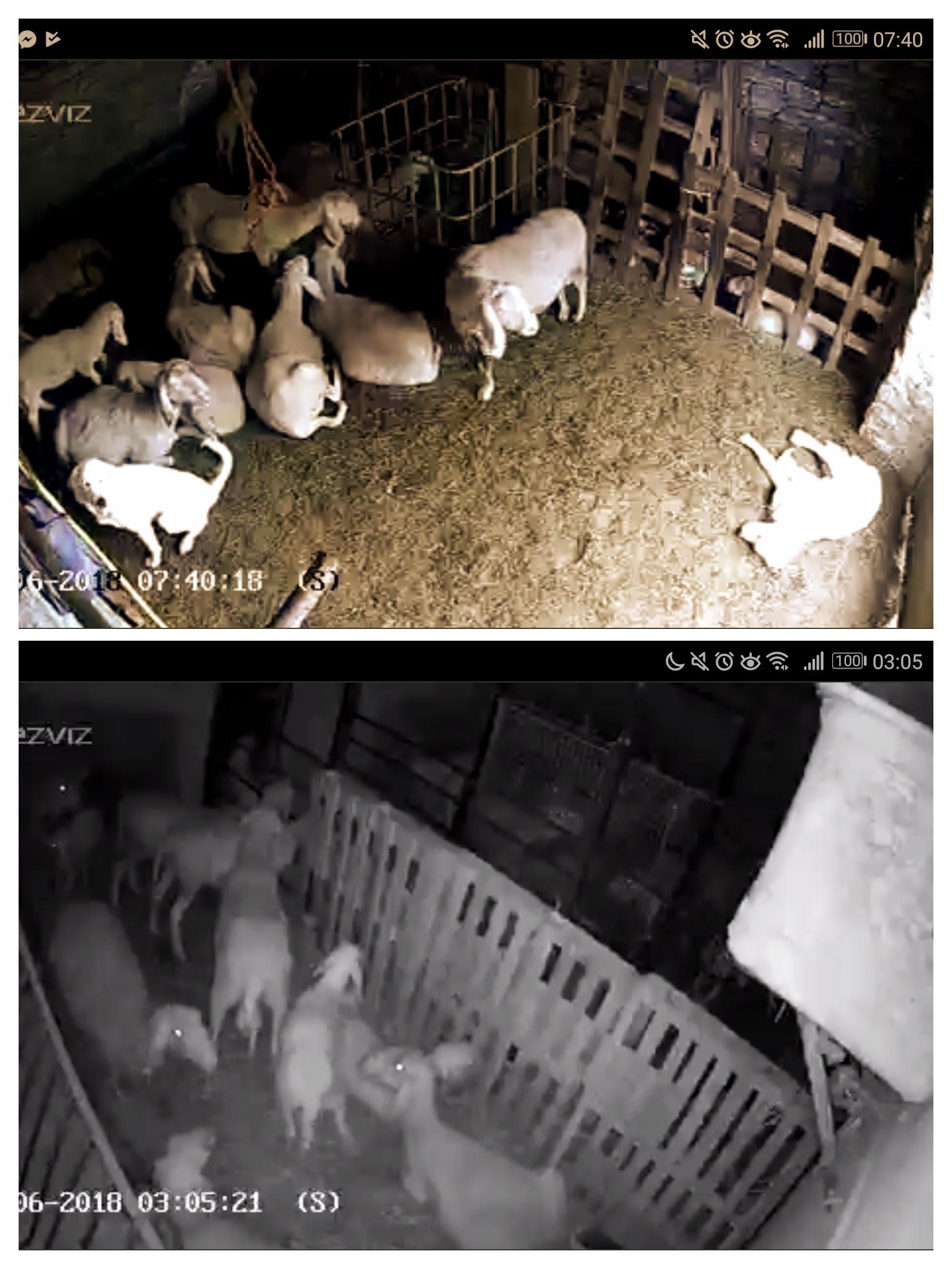 Visione diurna e notturna delle telecamere di sorveglianza in stalla.